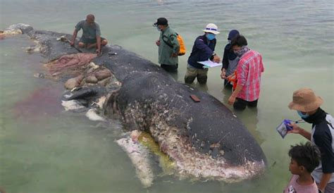 Whale Found With 13 Pounds of Plastic in Stomach | The Inertia