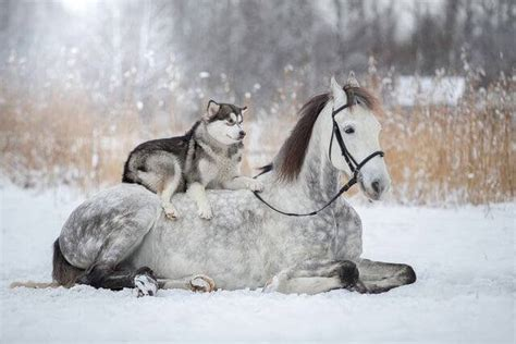 Friendship Between a Horse And Husky Dog Caught In