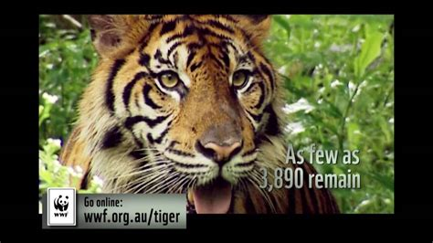 Adopt a Tiger Today - Help WWF double the number of tigers