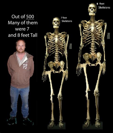 8 and 7 feet tall at least