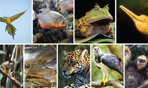 Which Amazon animal athlete do you relate to most? | Pages