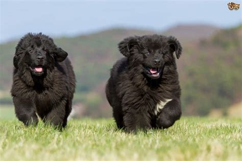 10 Of The Most Expensive Dog Breeds In The World - Page 3 of 5