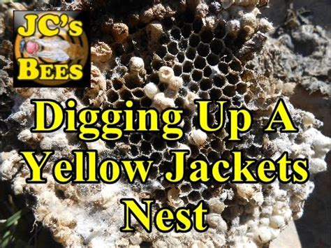 Digging Up A Yellow Jackets Nest - YouTube