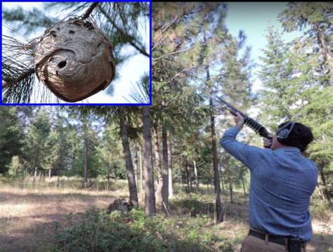 Relocating A Hornets Nest With a Shotgun - The Firearm