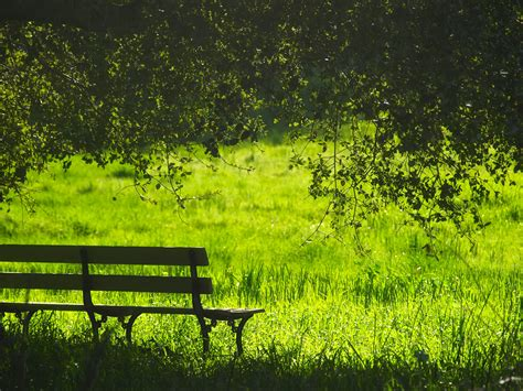 Free Images : landscape, tree, nature, forest, bench
