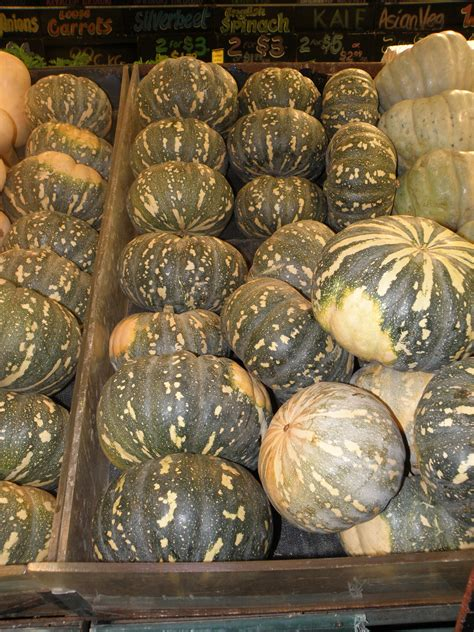 Growing pumpkins in Western Australia | Agriculture and Food