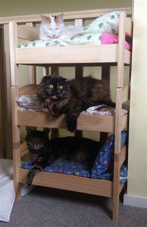 Triple Bunk Beds for Cats   IKEA   Ikea doll bed, Diy cat bed