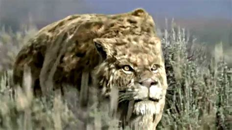 SMILODON - Sabre Toothed Beast [HD] - YouTube