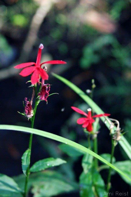 Lower Shore Land Trust's Annual Native Plant Sale: May