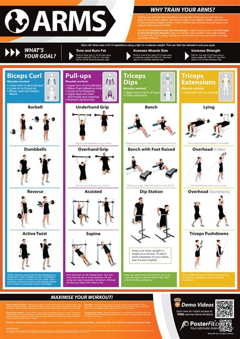 Weight Training: Arms   Gym workouts, Workout posters, Workout